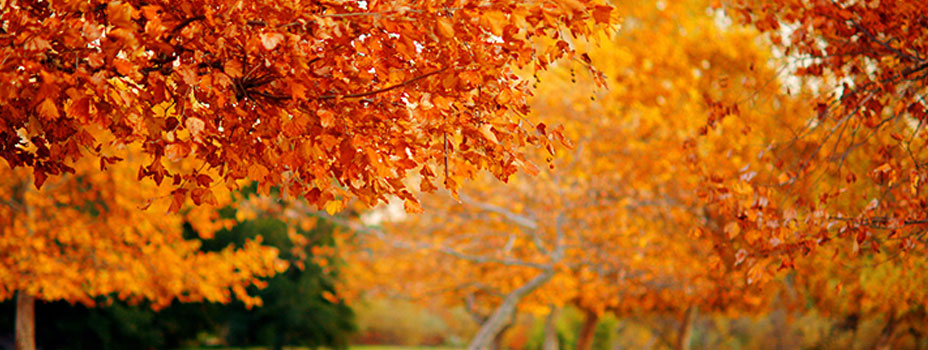 orange-leaves1
